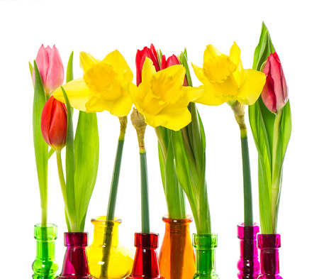 tulip and narcissus flowers in colorful glass vases on white background photo