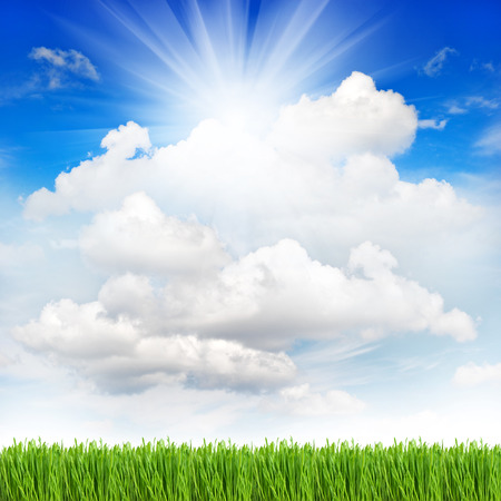 on the sky background: fresh green spring grass with water drops over perfect cloudy blue sky background  environment concept