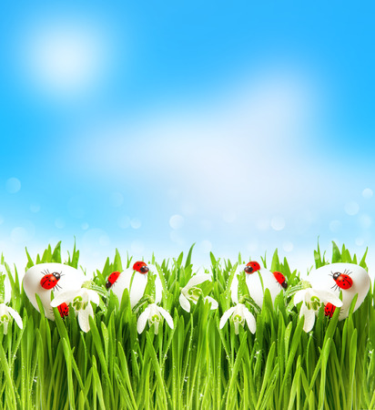 snowdrops and easter eggs in fresh green grass  spring landscape with blurred background photo