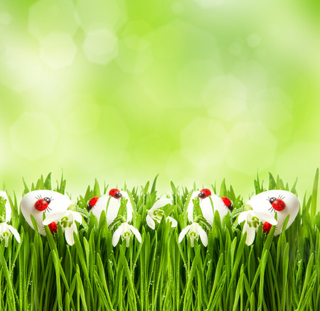 fresh green grass with flowers and easter eggs over nature blurred background   photo