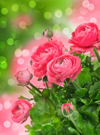 anemone flower: beautiful bouquet of spring flowers pink ranunculus over blurred fantasy background Stock Photo