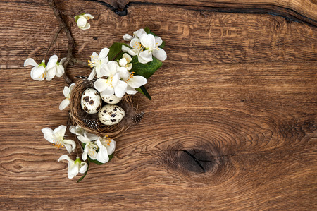 apple tree flowers and easter nest with eggs on rustic wooden background  spring blossom photo