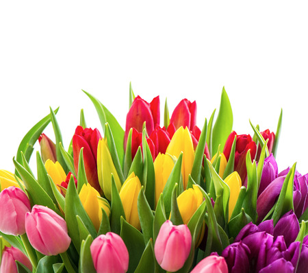 arrangements: bouquet of fresh colorful tulips over white background  spring flowers