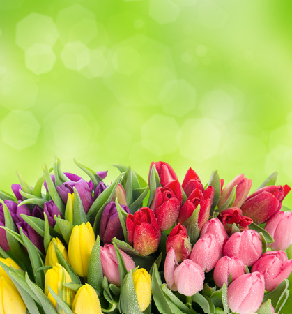 birthday flowers: bouquet of multicolor tulips over blurred green background  fresh spring flowers with water drops Stock Photo