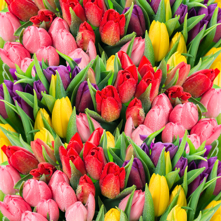 april flowers: bouquet of multicolor tulips  fresh spring flowers with water drops  floral backdrop
