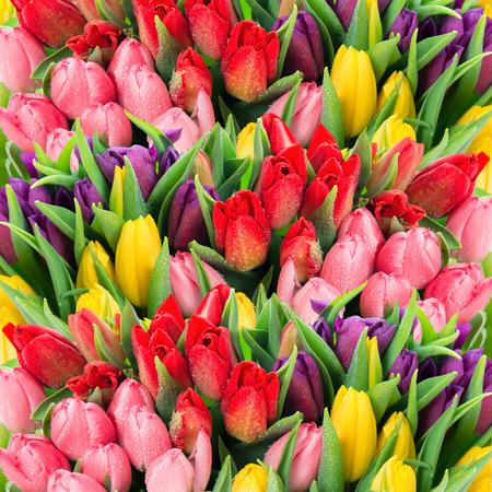 arreglo de flores: ramo de tulipanes multicolores flores frescas de primavera con gotas de agua telón de fondo floral Foto de archivo