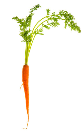 fresh single carrot with green leaves isolated on white background  Vegetable  Food