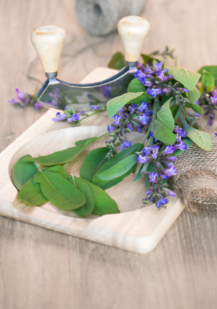fresh sage leaves and blossoms on wooden cutting board with a curved knife mezzaluna  raw food ingredients  herbs and spices  selective focus photo
