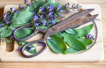 fresh sage leaves and blossoms on wooden cutting board with vintage rusty scissors   food ingredients  herbs and spices  selective focus photo