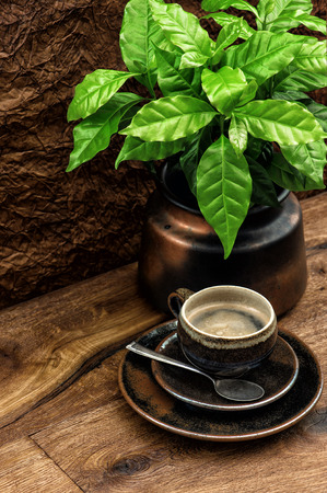 Cup of black coffee and fresh coffee plant on wooden table photo
