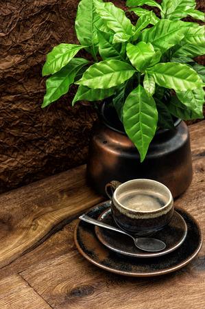 planta de cafe: Taza de caf� negro y planta de caf� fresco en la mesa de madera