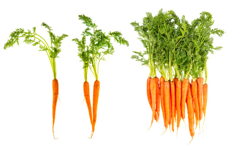 white isolate: fresh carrots with green leaves isolated on white vegetable  food