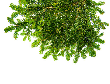 undecorated: christmas tree twigs undecorated isolated over white background Stock Photo