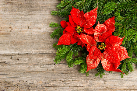 beautiful christmas tree branch with red poinsettia flower on wooden background photo