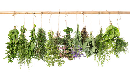 varios fresh herbs hanging isolated on white background  basil; rosemary; sage; thyme; mint; oregano, marjoram; savory; lavender Reklamní fotografie
