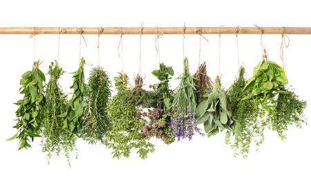 varios fresh herbs hanging isolated on white background  basil; rosemary; sage; thyme; mint; oregano, marjoram; savory; lavender Standard-Bild