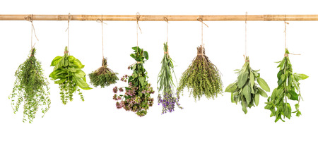 dried herb: varios fresh herbs hanging isolated on white background  bundle of basil, sage, thyme, mint, marjoram, lavender