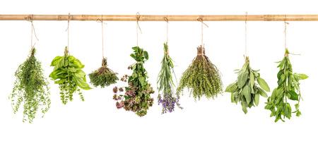 flores secas: Varios hierbas frescas colgando aislados sobre fondo blanco manojo de albahaca, salvia, tomillo, menta, mejorana, lavanda
