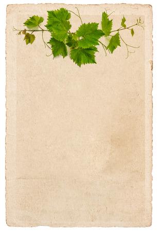 Feuille de papier ancienne avec des feuilles de vigne ornement isolé sur fond blanc Banque d'images - 30505808