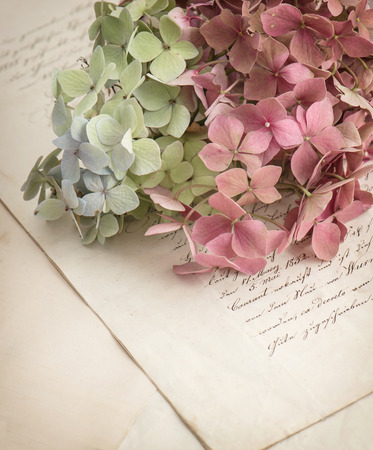 old love letters and garden flowers hydrangea  romantic vintage style background  selective focus