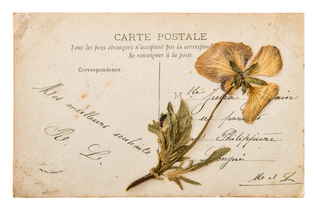 antique french postcard with dry pansy flower. handwritten vintage mail. nostalgic sentimental background photo