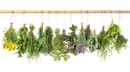 fresh herbs hanging isolated on white . basil, rosemary, sage, thyme, mint, oregano, marjoram, savory, lavender, dandelion Stockfoto