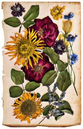 dried flower: dried flowers on aged paper sheet. lavender, roses, sunflowers, cornflower. oil painting style. retro color toned picture Stock Photo