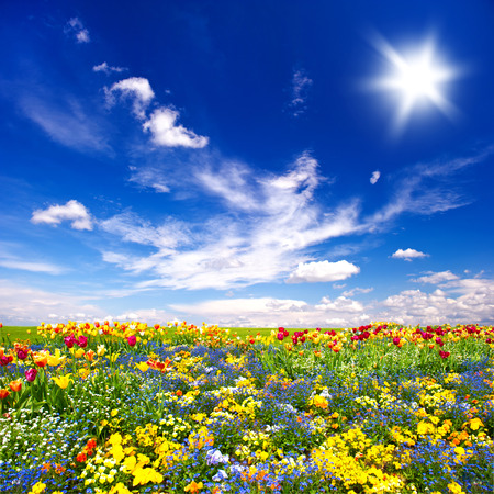 flowers field: beautiful flowers meadow and cloudy blue sky. nature landscape Stock Photo