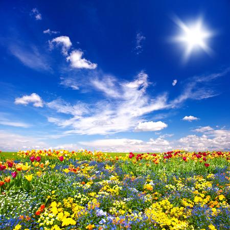 campo de flores: flores hermoso prado y azul cielo nublado. paisaje de la naturaleza