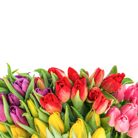 bouquet of fresh multicolor tulips over white background. spring flowers with water drops photo