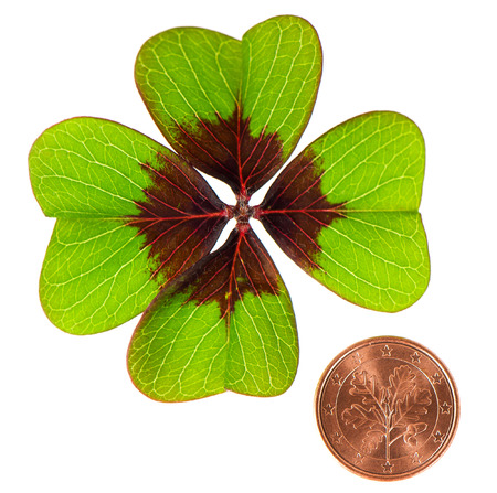 symbols of luck. coin and shamrock leaf on white background photo