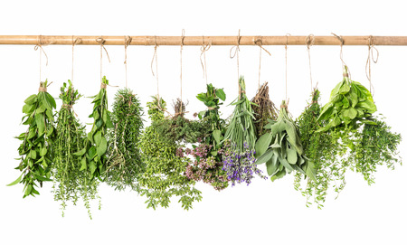 fresh herbs hanging isolated on white background. thyme, mint, basil, rosemary, sage, oregano, marjoram, savory, lavender