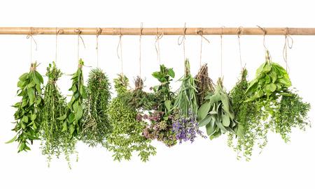 verse kruiden opknoping geïsoleerd op een witte achtergrond. tijm, munt, basilicum, rozemarijn, salie, oregano, marjolein, bonenkruid, lavendel Stockfoto