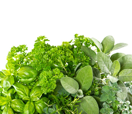 Fresh herbs over white background. Healthy food ingredients. Marjoram, parsley, basil, rosemary, thyme, sage