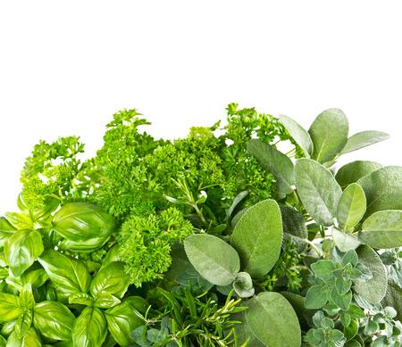 Verse kruiden op een witte achtergrond. Gezonde voedingsingrediënten. Marjolein, peterselie, basilicum, rozemarijn, tijm, salie Stockfoto