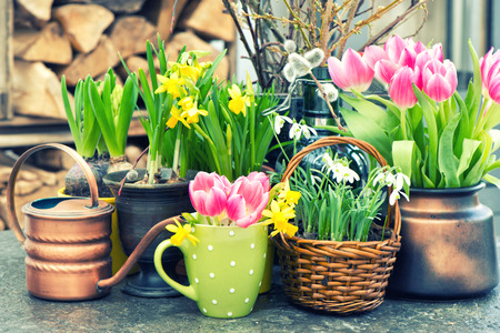 Spring flowers. Tulips, snowdrops and narcissus blooms. Festive Easter home interior