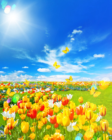 Tulip flowers in green grass. Spring landscape with butterflies and sunny blue sky. Retro style toned picture with light leaks and lens flares