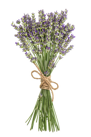 perfumed: Lavender flowers bunch isolated on white. Fresh provencal plant bouquet