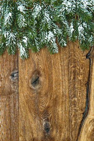 undecorated: Christmas tree branches over wooden background. Undecorated evergreen twigs with snow