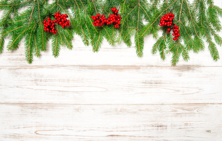 hollyberry: Christmas tree branch with red berries on wooden background.