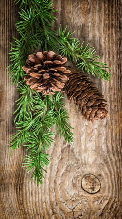 undecorated: Christmas tree branches with pine cones. Undecorated evergreen twigs. Vintage style toned picture