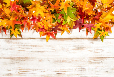 Multicolor autumn leaves over bright wooden background Stock Photo