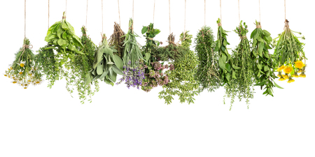 Fresh herbs hanging isolated on white background. Basil, rosemary, sage, thyme, mint, oregano, marjoram, savory, lavender, dandelion, camomile