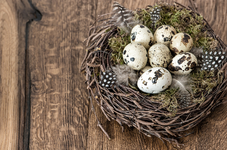 quail nest: Easter decoration. Quail eggs in nest on rustic wooden background