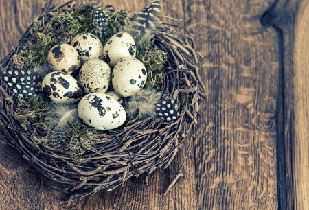 quail nest: Easter decoration. Quail eggs in nest. Vintage style toned picture Stock Photo