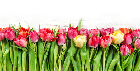 spring green: Tulips. Spring flowers pink yellow red green