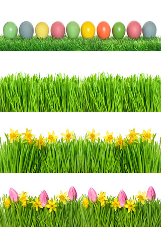 Floral Easter banner. Spring narcissus and tulip flowers. Green grass with water drops