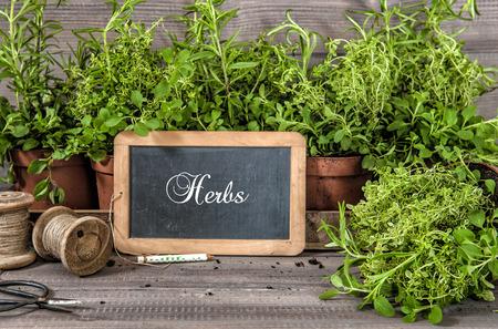 Kruidentuin. Gezonde voedselingrediënten rozemarijn, tijm, oregano