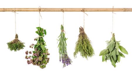 Herbs hanging isolated on white background. Fresh sage, thyme, oregano, marjoram, lavender Zdjęcie Seryjne - 57665251