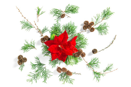 pinecones: Floral flat lay. Red Christmas flower poinsettia and thuja branches over white background